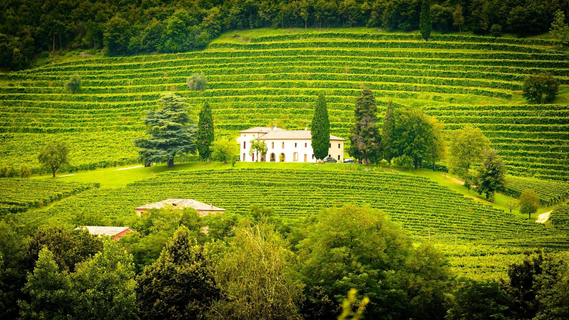 Zahraniční vína